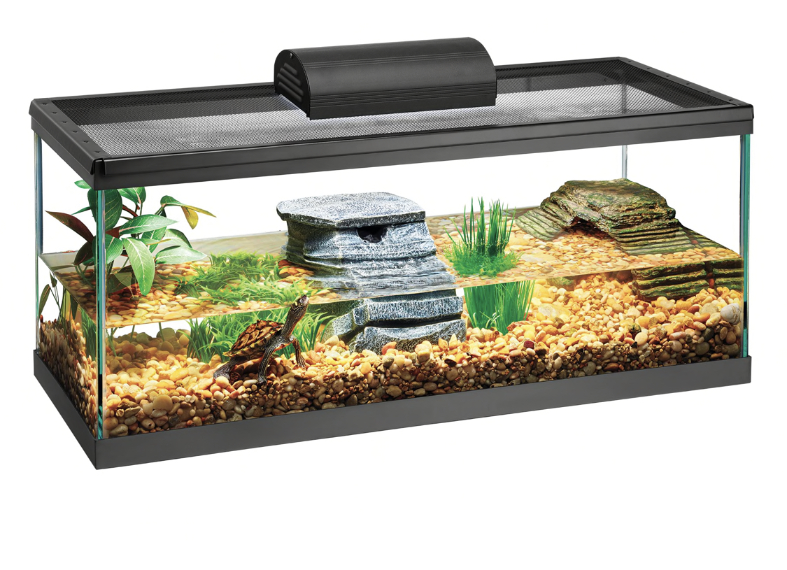 My Dream Turtle Tank